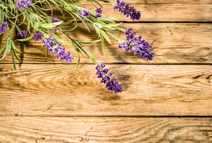 fresh lavender plant on wooden table