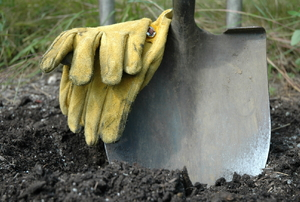 A shovel set into the soil with a pair of yellow work gloves.