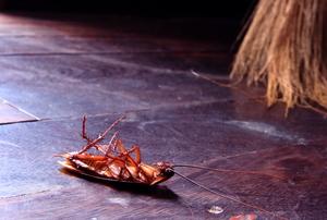 a dead roach on a floor