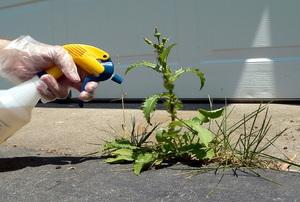 spay bottle misting weeds