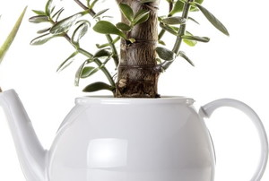 Succulent plants growing from a tea pot