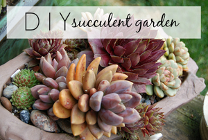 """A group of potted succulents with the phrase """"DIY succulent garden."""""""