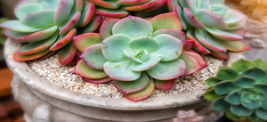 Creative Succulent Garden Ideas