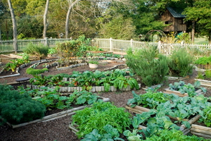 How to Plant a Potager Garden