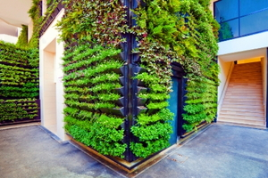 Vertical Garden: Growing Indoors