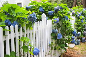How to DIY a White Picket Fence