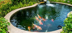 Water garden features for How much does it cost to build a fishing pond