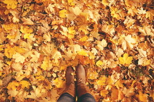 5 Ways to Recycle Fall Leaves