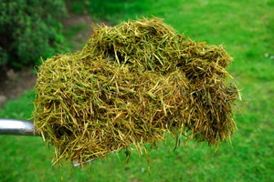 Green Ideas for Mulch Alternatives