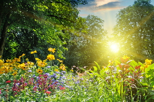Gardening in the Heat: Keep Cool and Stay Safe