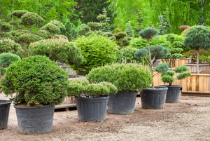 Low-Maintenance Trees and Shrubs for the Landscape