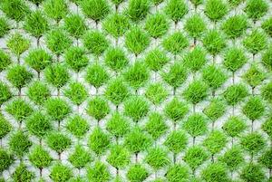 Grasscrete 101