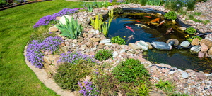 How Much Energy Does a Koi Pond Consume?