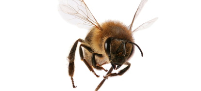 Pool Problem: Keeping Bees Away From Your Pool