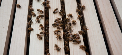 How to Eliminate Bees Living in Exterior Siding