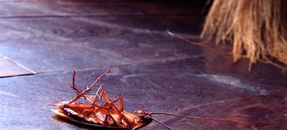 Using Household Items as a Roach Remedy | DoItYourself com