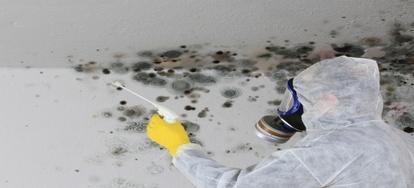 Symptoms of Black Mold Poisoning   DoItYourself com