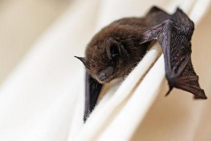 A Bat Inside House