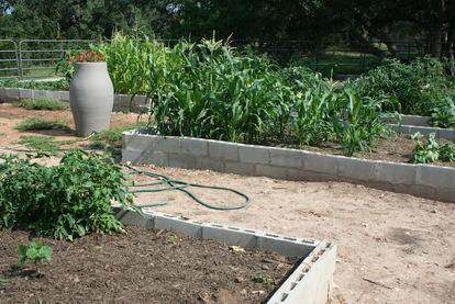 Raised garden beds made of cinder blocks.