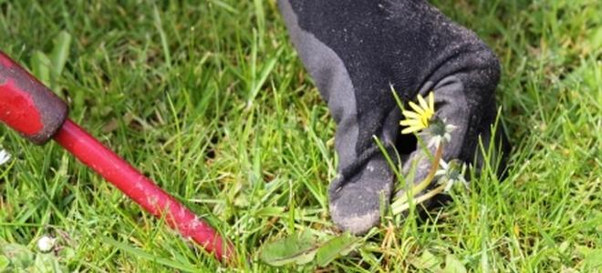 How To Do Basic Lawn Repair Doityourself Com