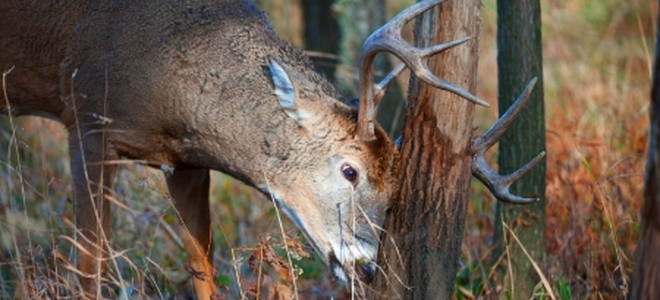 How To Protect Tree Trunks From Deer And Other Wildlife