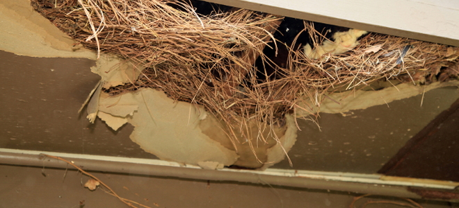 Bird Nest Removal Tipistakes To Avoid
