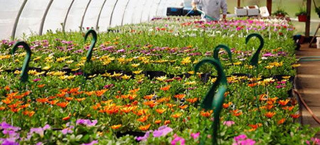 4 Greenhouse Insulation Options | DoItYourself.com