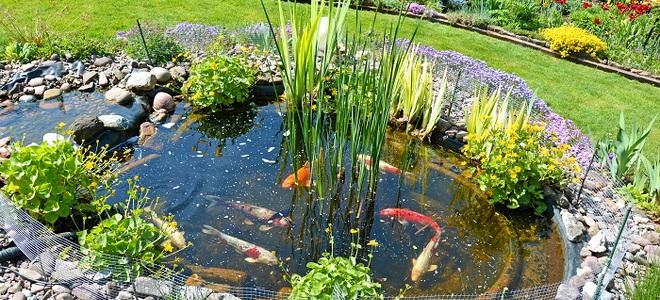 7 koi pond maintenance tips