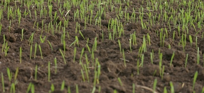 Hot Topics When To Water Lawn Seedlings