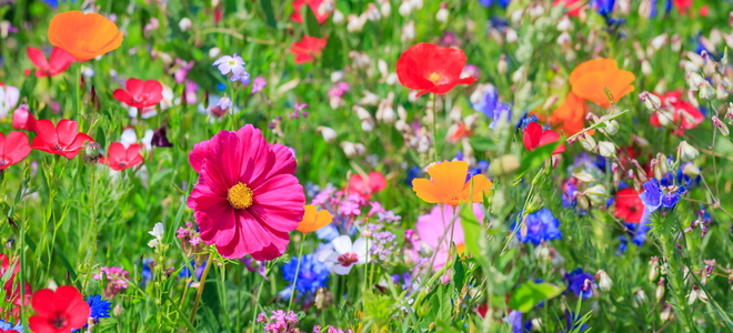 Why You Should Grow A Wildflower Or Moss Lawn Doityourself Com