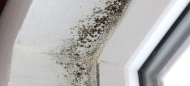 How To Remove Black Mold On Windows