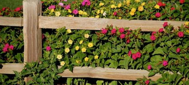 How To Build A Living Fence How To Build A Living Fence
