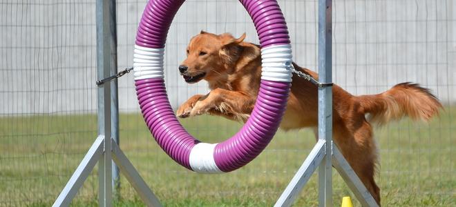 How To Make Dog Playground Equipment Doityourself Com