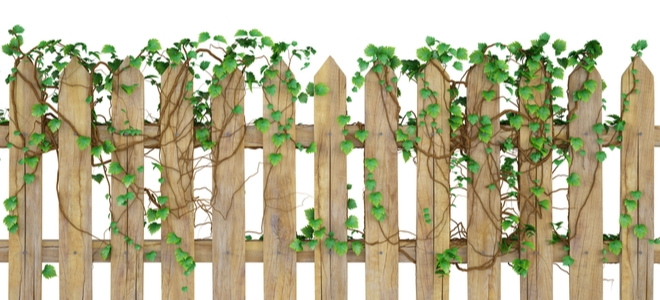 Best Type Of Garden Fencing For Growing Vines Doityourself Com