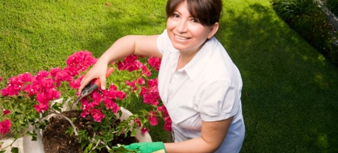 Town And Country Insurance >> How to Grow a Bougainvillea from Cuttings | DoItYourself.com