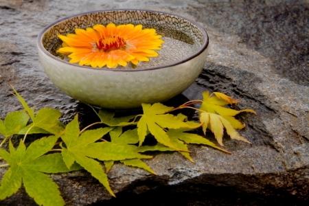 Elements of a Zen Garden – Zen Garden Plants
