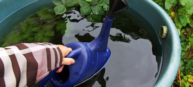A rain barrel with a watering can being dunked into it.
