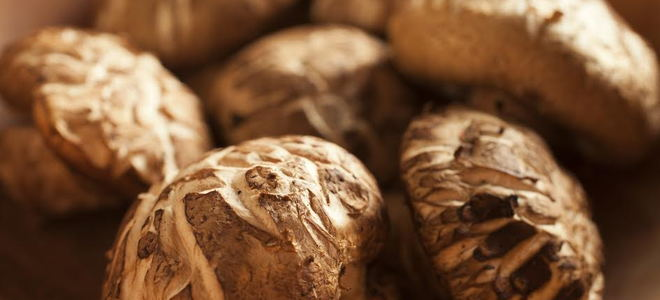 A close-up of mushrooms.