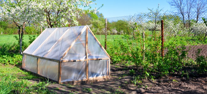 small greenhouse in spring garden