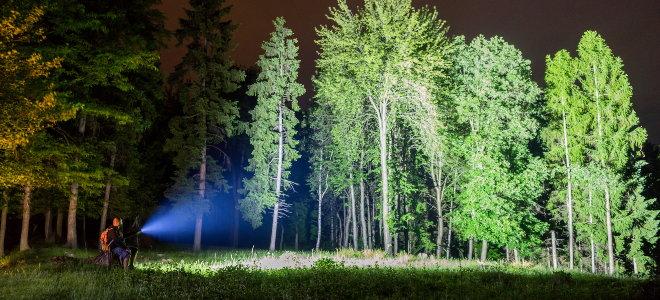 person shining powerful flashlight on tree