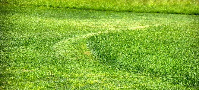 mowed lawn with long and short grass