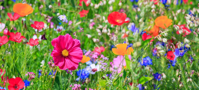a varied field of bright flowers
