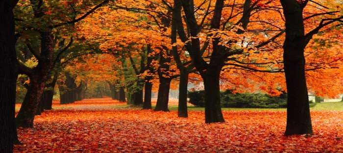 Fall foliage on pathway