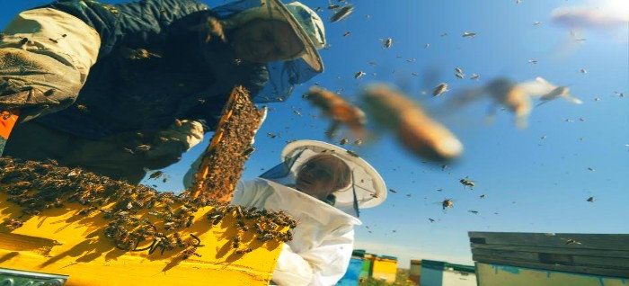 beekeepers extracting honeycombs from a hive