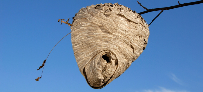how to safely get rid of a beehive doityourself com
