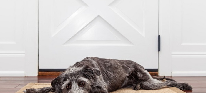 Hot Topics Saving A Door From Pet Urine Stains Doityourself