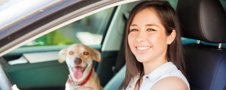 Protecting Your Pet while driving
