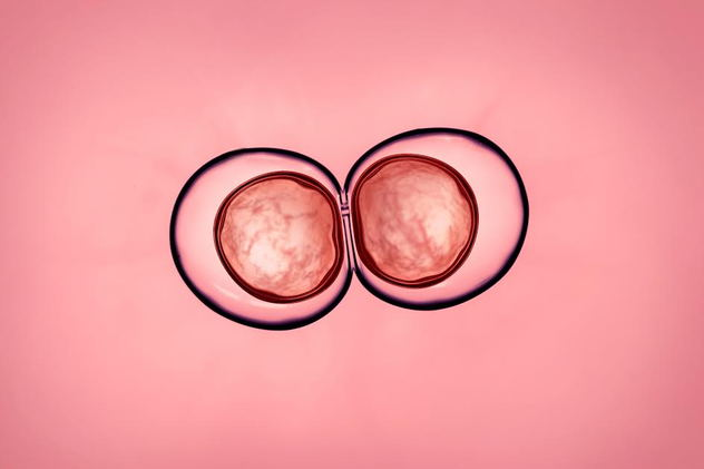 A zygote against a pink background.