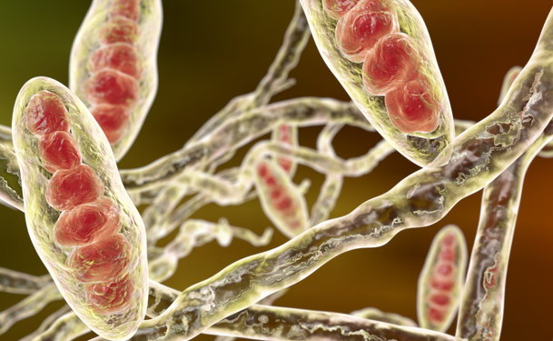 Fungal Infections  Athlete U0026 39 S Foot