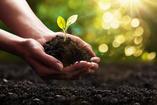recovering addict gardening